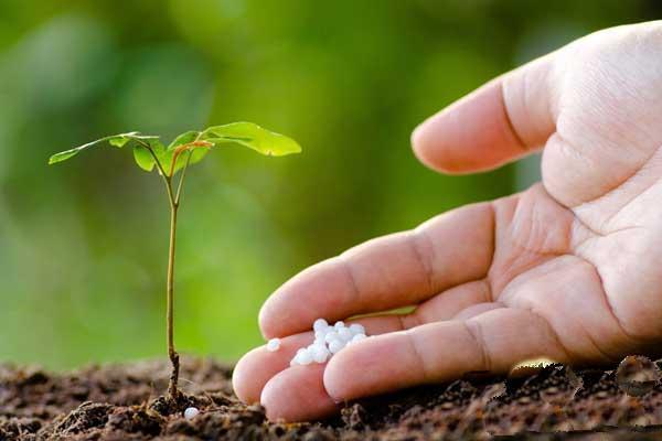 全面客观分析有机肥料的特点及作用