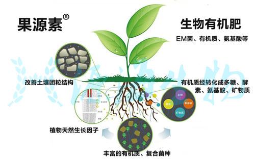 有机质和有机物在土壤中的转化过程