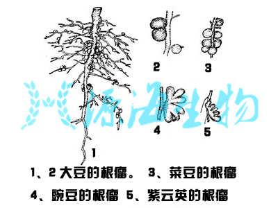 微生物菌肥种类