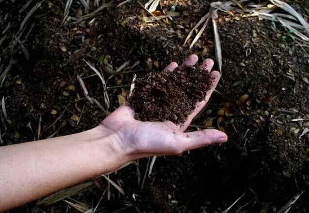 土壤有机质