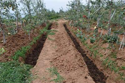 苹果树秋季施肥,你懂吗?