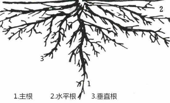 不知道这些山楂树施肥技术,就落伍了!!