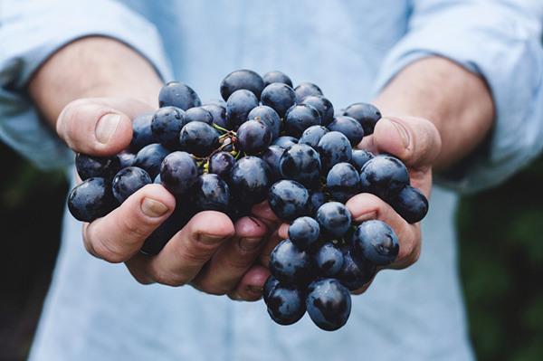 震惊!葡萄秋施有机肥居然可以这样做!