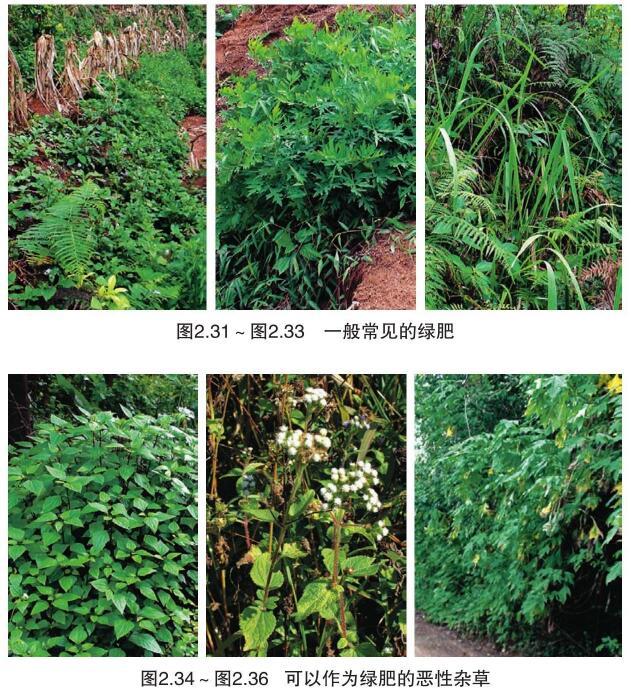 新定植核桃树的有机肥用量用法