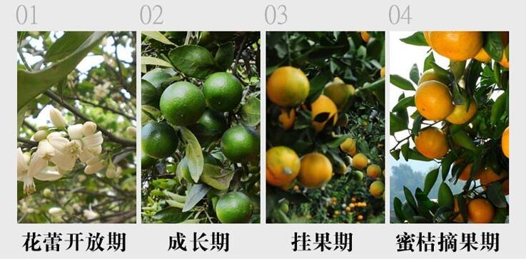 橘园有机肥替代化肥技术