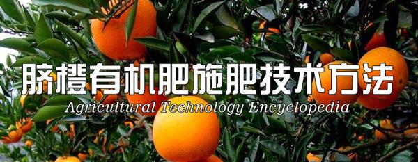 脐橙有机肥施肥技术方法