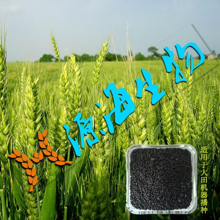 小麦开春返青期,如何看苗施肥?