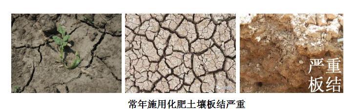 道路千万条,肥料第一条,施肥不规范,收成两行泪